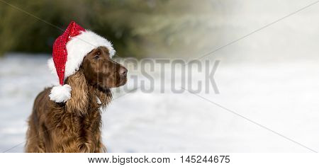 Website banner of a Christmas dog with Santa Claus hat