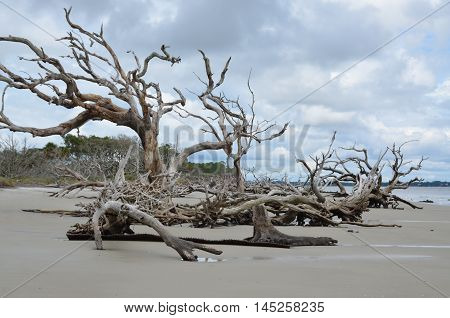Driftwood on the beach under stormy skies