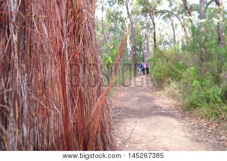 Bush walk and hike in rugged wood lands