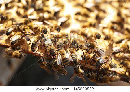 Honeybees working near hive