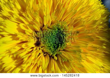 The Sun And The Sunflower Are Friends For Millennia