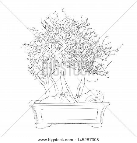 Vector sketch of bonsai. Hand draw illustration.