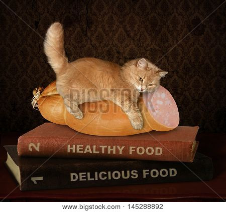 A cat lies on a sausage. There is a difficult choice between tasty and healthy food.