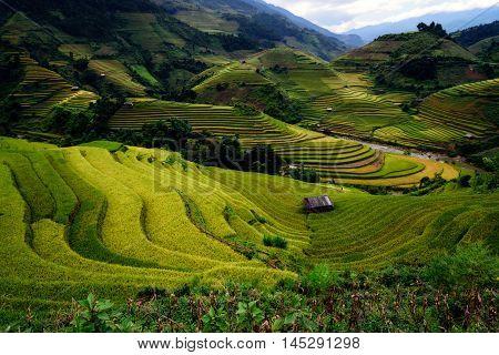 Rice Fields On Terraced Of Mu Cang Cha