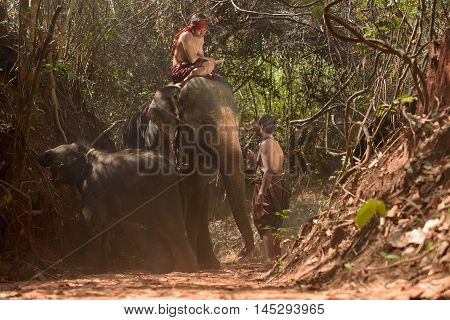 Big Elephant And Baby Walking In The Jungle