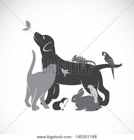 Vector group of pets - Dog cat parrot chameleon rabbit butterfly guinea pig hummingbird isolated on white background.