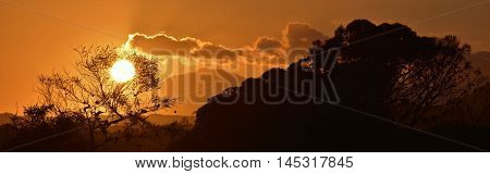 Landscape with beautiful african sunset and Eucalyptus Tree