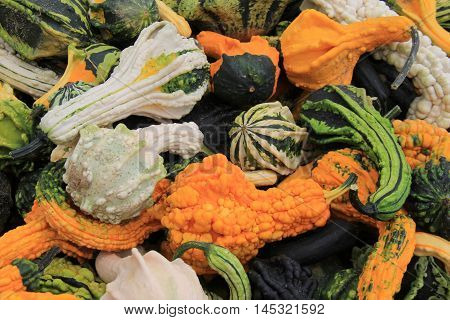 Bright and colorful variety of squash, just harvested and ready for sale at local farmers market.