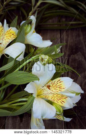 White Astromeria On Wooden Background