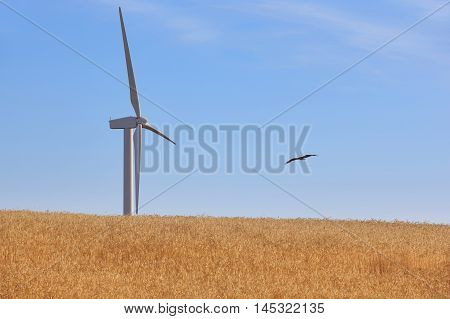 Wind turbine in the countryside. Clean alternative renewable energy. Vulture. Horizontal