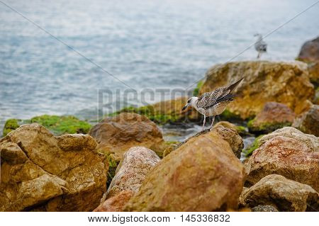 Seagulls sit on the rocky outcrops of the coastline