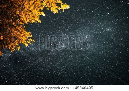 Starry sky with Milky Way and branch of the highlighted tree