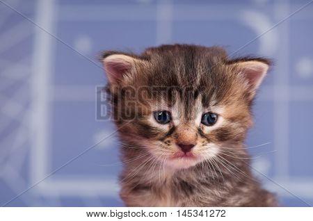 Sad cute kitten over light blue background