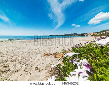 plants and flowers in Le Bombarde beach Sardinia