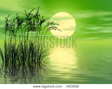 Grass_Sunset_Mid_A
