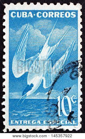 CUBA - CIRCA 1953: a stamp printed in Cuba shows Roseate Tern Sterna Dougallii Seabird circa 1953