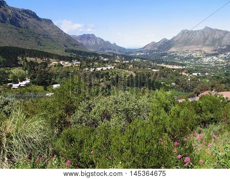 Forest Area In Hout Bay, Cape Town South Africa 01b