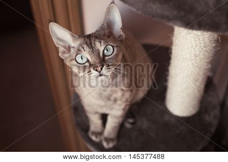 Beautiful cat is sitting on the scratching post. Cat is feeling comfortable and safe being at home. Home pets. Cats supplies and equipment