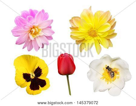 set of various flowers isolated on white background