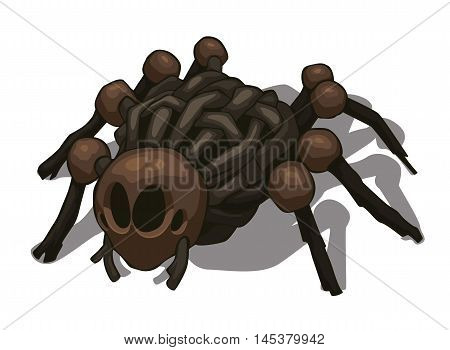 Vector colored illustration of spider isolated on white background.