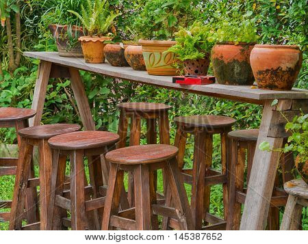 fern in clay pots on Wooden table, in the garden.
