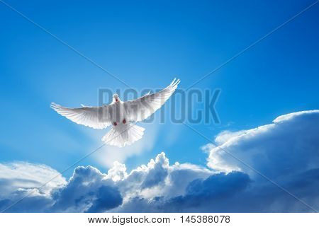 White Dove in the air symbol of faith over shiny background