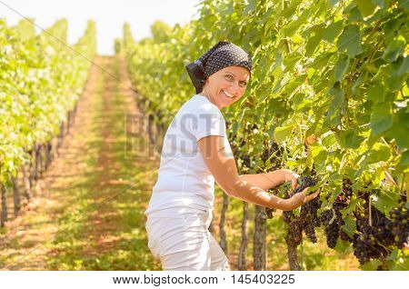 Smiling Middle-aged Woman Working In A Vineyard