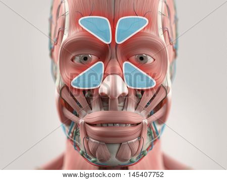Anatomy model showing sinus infection. 3D illustration