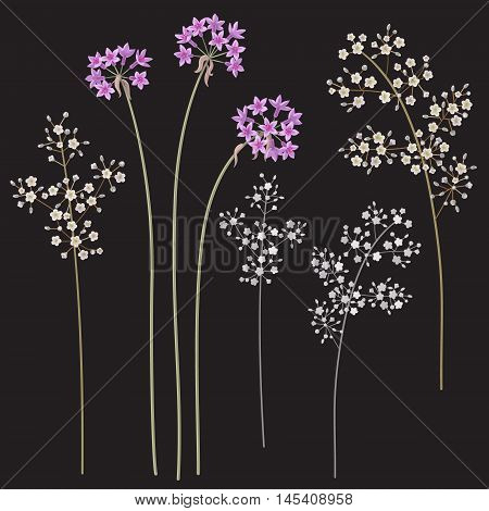 Small Gypsophila flowers on high stems isolated on dark background. Simplified floral elements set for decoration.