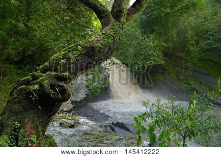 deep jungle of Thailand with waterfall in the background