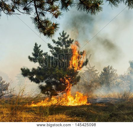 Forest Fire Wildfire burning tree in red and orange color