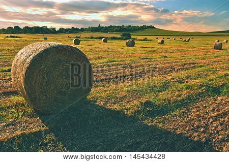 Hay Bail Harvesting In Golden Field Landscape. Summer Farm Scenery With Haystack On The Background O
