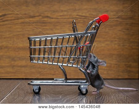Grocery supermarket trolley and gray mouse. Concept - pet products supermarket or online.
