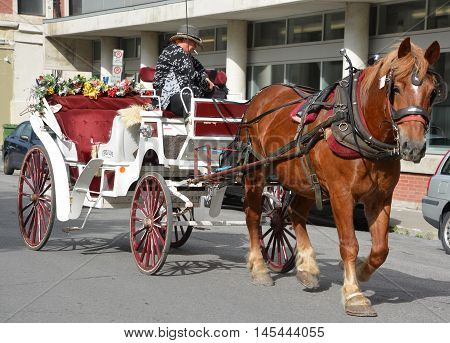 MONTREAL QUEBEC CANADA AUGUST 15 2016: Horse drawn buggy in the heart of the Old Montreal. Montreal is the largest city in the province, the second-largest in the country.