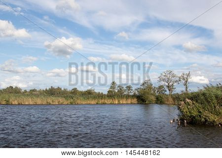 Blue sky over a Dutch polder with reeds and trees