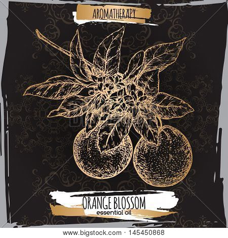 Orange blossom sketch on elegant back lace background. Aromatherapy series. Great for traditional medicine, perfume design, cooking or gardening.