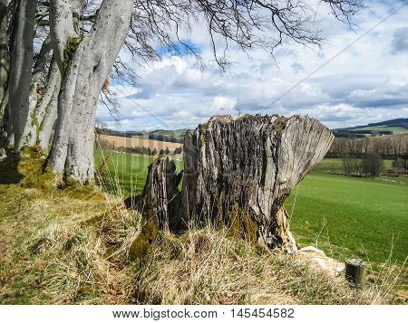Remains of ancient tree with backdrop of beautiful Scottish Highlands rural scenery