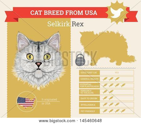 Selkirk Rex Cat breed vector infographics. This cat breed from USA