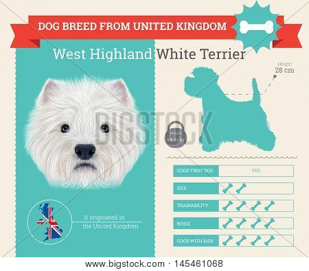 West Highland White Terrier dog breed vector infographics. This dog breed from United Kingdom
