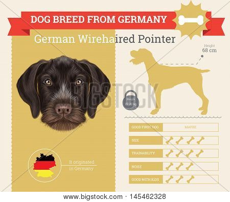 German Wirehaired Pointer dog breed vector infographics. This dog breed from German