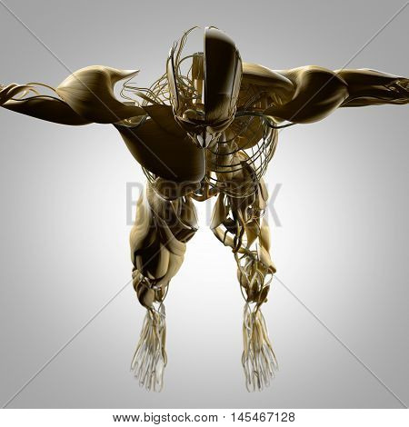 Human anatomy head and torso. Muscle and arteries deconstructed. 3D Illustration.