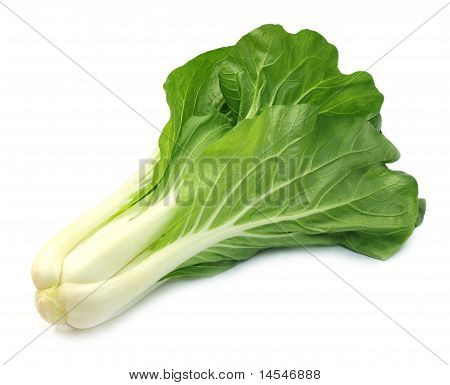 Chinese cabbage or bok choy