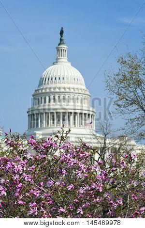 U.S. Capitol Building - Washington D.C. United States