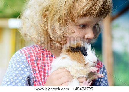 Cute white toddler girl in a rustic style dress holding a fluffy red guinea pig on her hands