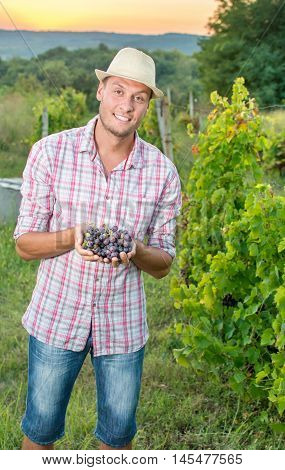 Proud Farmer Holding Freshly Picked Grapes