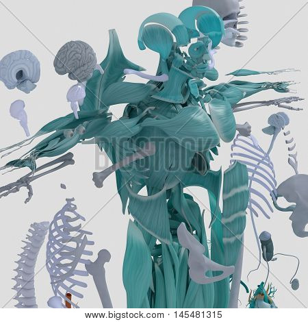 Human anatomy exploded view, deconstructed showing separate parts, muscles, organs, bones. Creative color palettes and designer detail. 3D illustration, Augmented Reality.