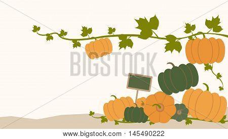 pumpkins vegetable stalk stem leves branch fall