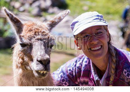 Llama In Peru