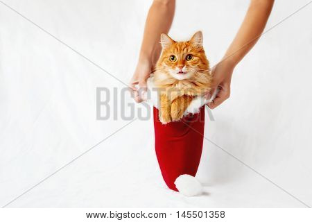 Women holds a red christmas hat with ginger cat in it. Cute christmas cozy background with place for your text. Symbol of christmas present or pet adoption.