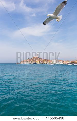 Seagull Flying Over Rovinj Town With Landmark Of Church Tower, Istria, Croatia, Europe.